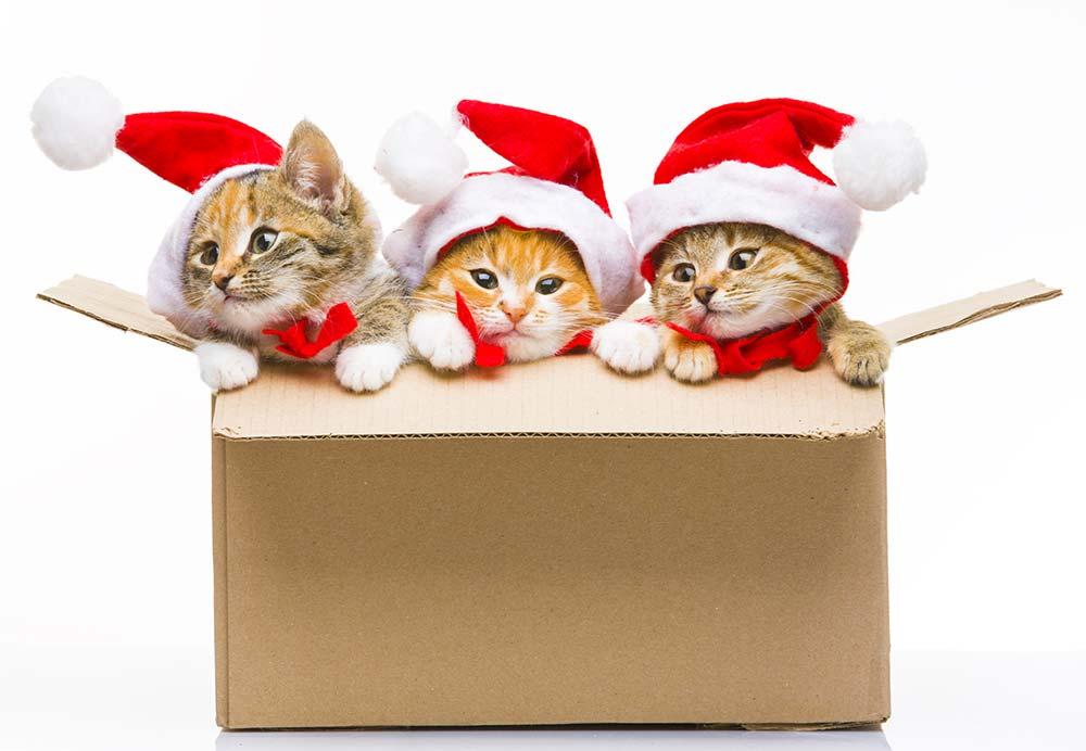 Global Pet Foods Cat Carrier