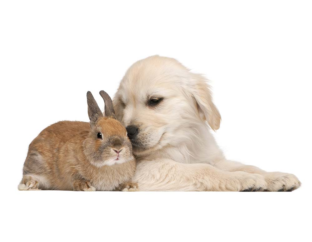 rabbits_friends
