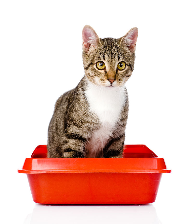 All About Cat Litter For Kittens