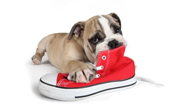 gpf_cta_puppy_shoe
