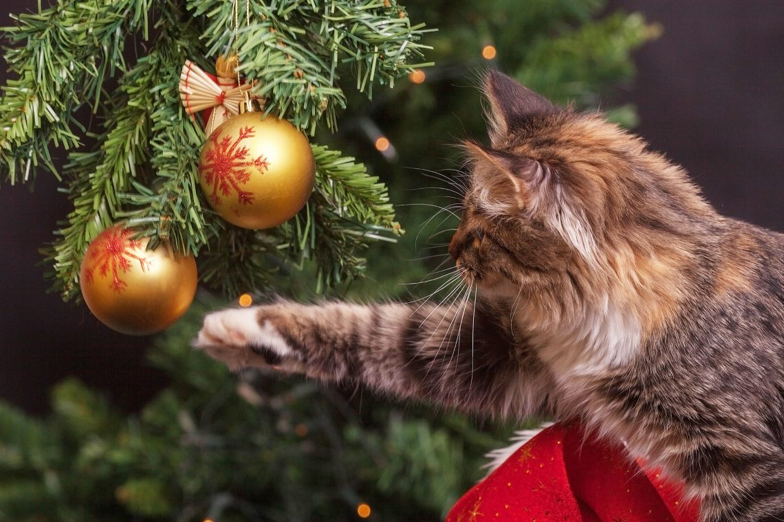 Ho-ho-holiday Pet Hazards
