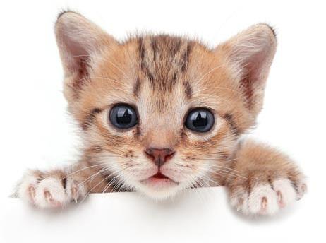CTA-KittenChecklist