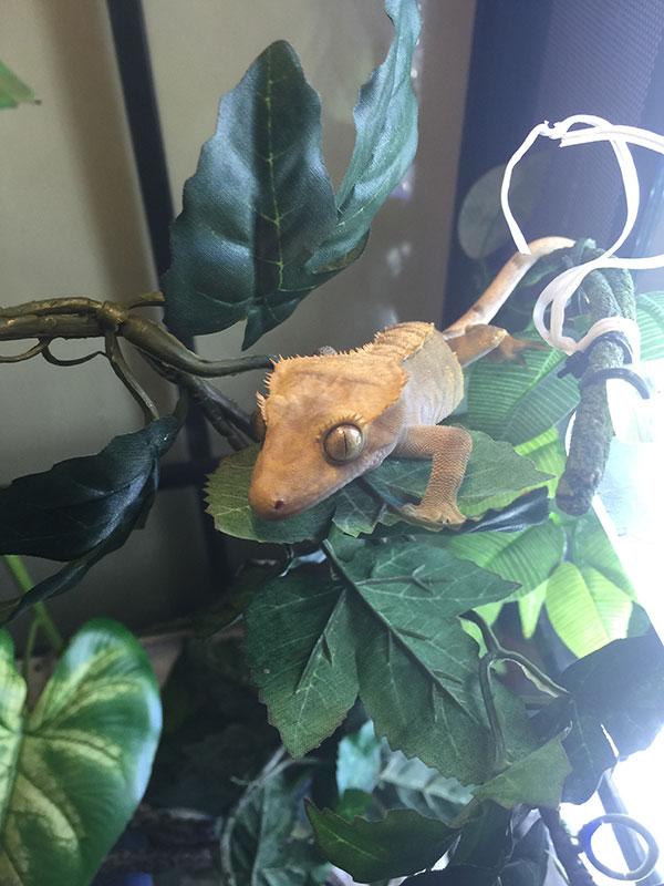 reptilefood-robyn