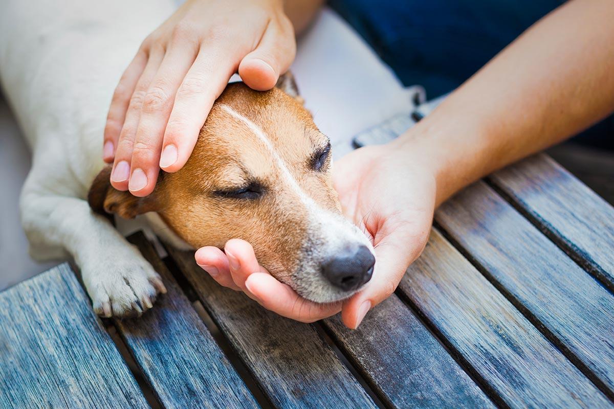 Dog Emergency Care