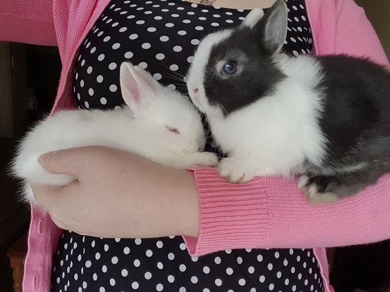 rabbitlitterbox-lunaruby