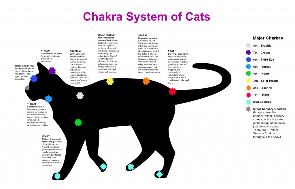 Chakra System of Cats
