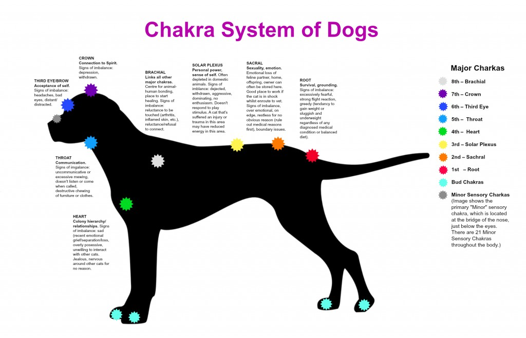 Chakra System of Dogs