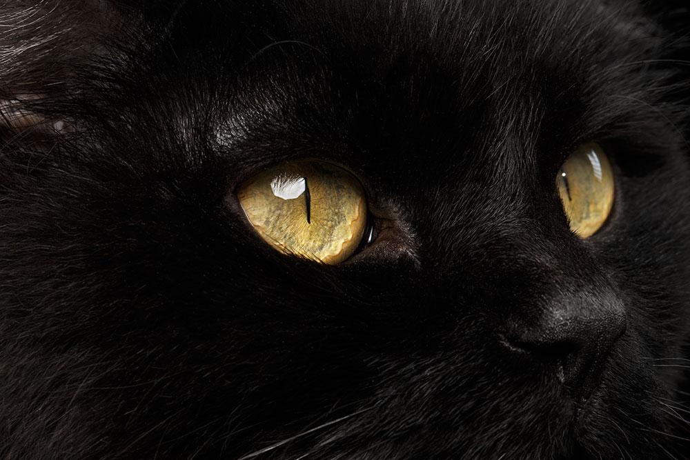 supercat-vision