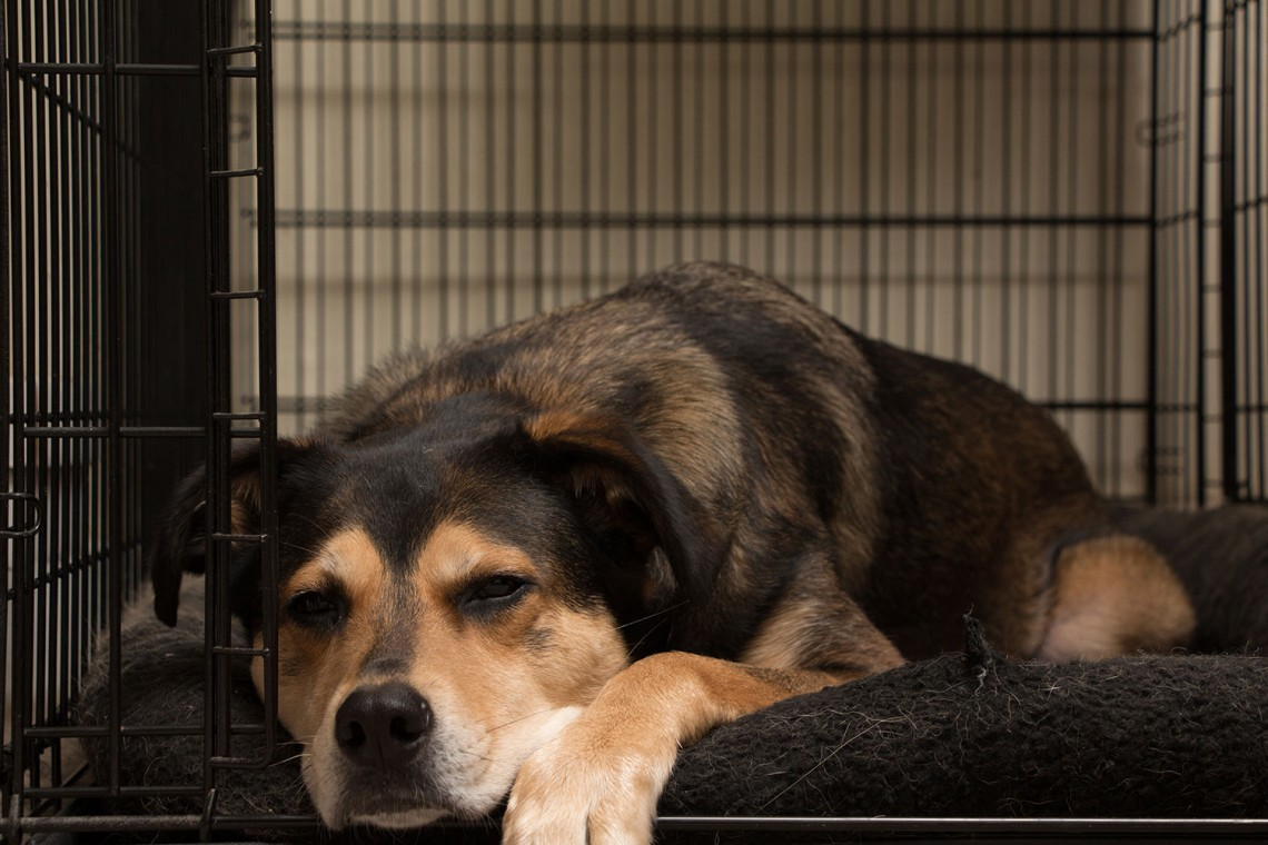 Is it ok to kennel or crate my dog at night?