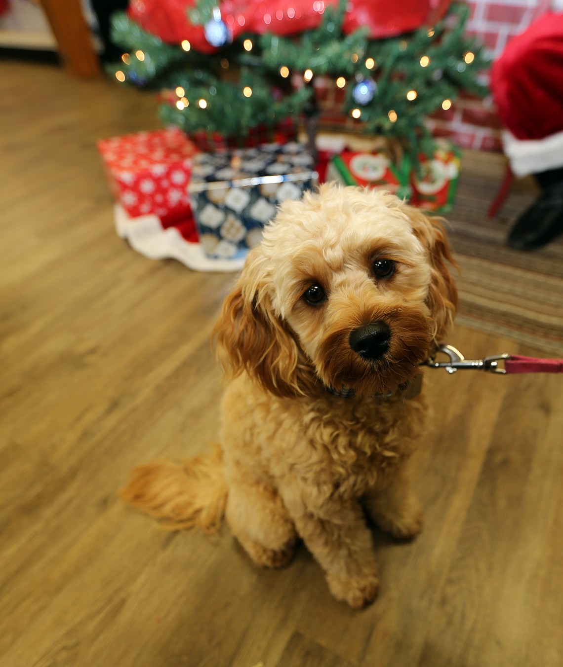 What New Brunswick Shelters and Rescues want this Christmas