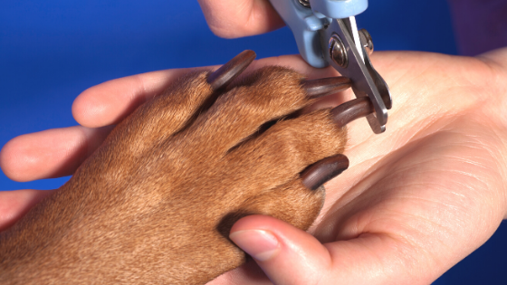 clipping dogs nails